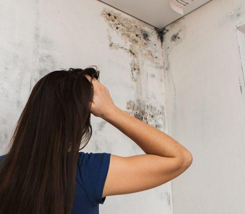 Cómo eliminar el moho de las paredes para siempre