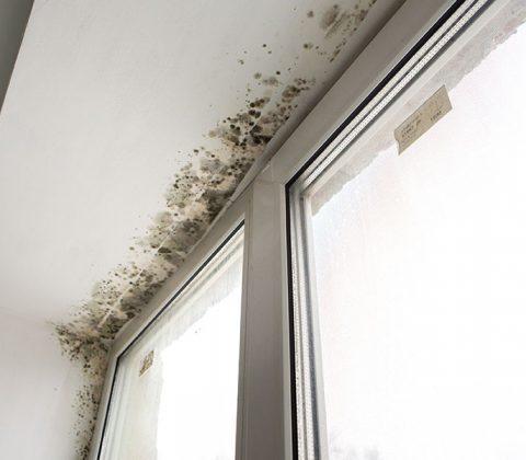 Reparar humedades de condensación en Cuntis - Precios y opiniones